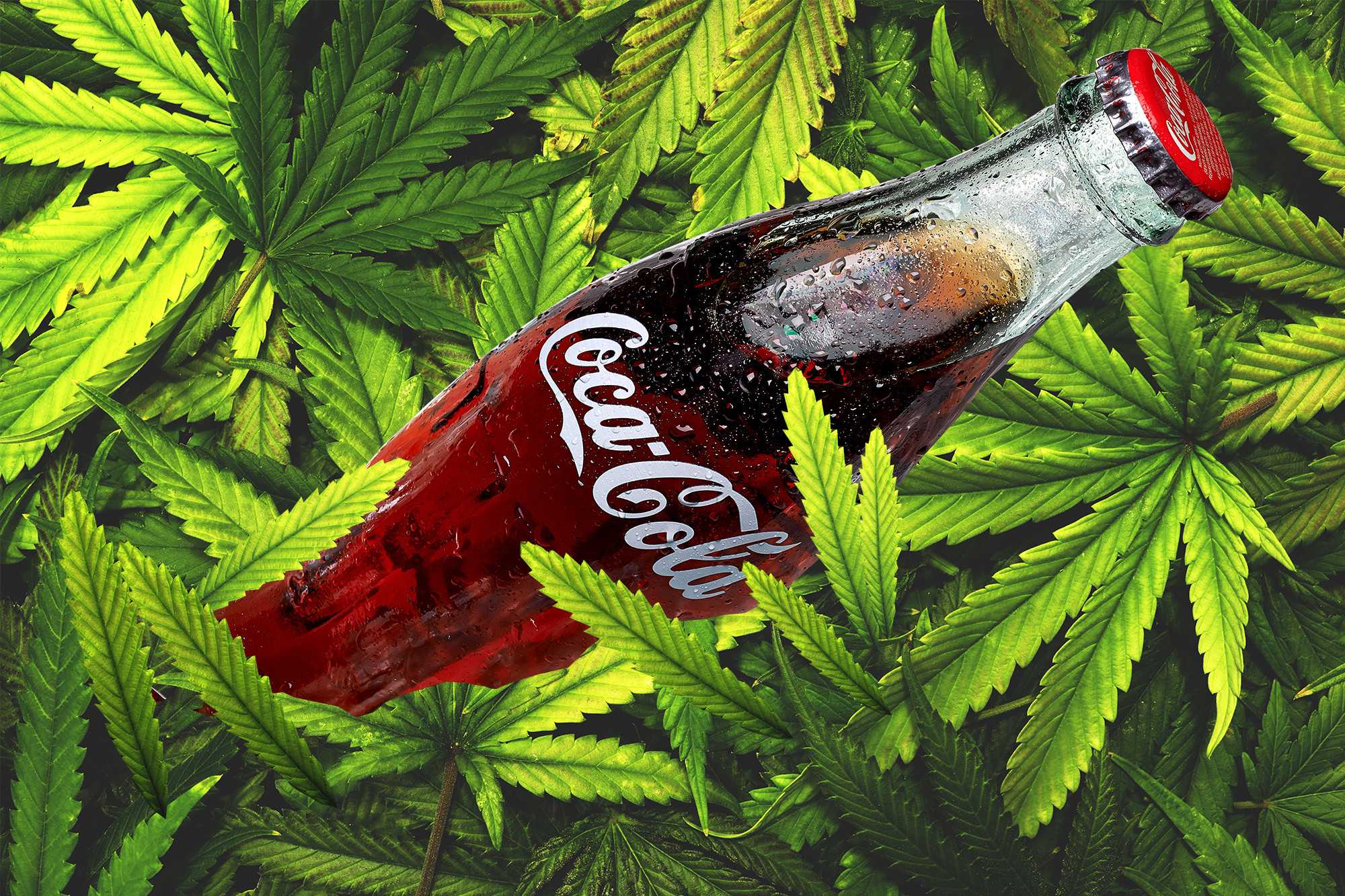 Coca-Cola and Aurora in talks to make cannabis infused drinks