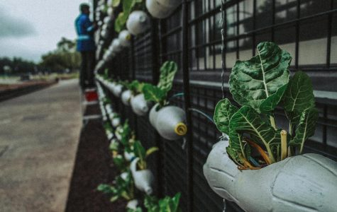 Easy ways to be more eco-friendly