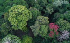 College of Forestry conducts research providing insight into the upper canopy of rainforests