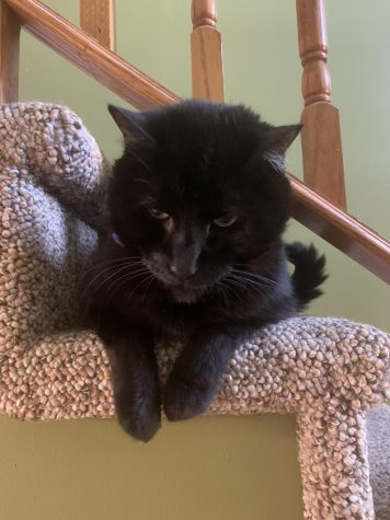"My loving house panther of nine years: ""Ozzy"""